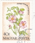 Stamps Hungary -  F L O R E S-ROSA  GALLICA