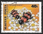 Stamps : Europe : Hungary :  escarabajo ajedrezado