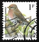 Sellos de Europa - Bélgica -  Common Redpoll