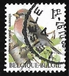 Stamps Belgium -  Common Redpoll