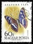 de Europa - Hungría -  mariposa