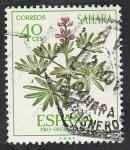 de Africa - Marruecos -  Sahara - 257 - Lupinus