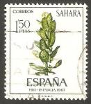 de Africa - Marruecos -  Sahara - 258 - Ficus sp.