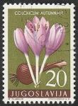 Sellos de Europa - Yugoslavia -  716 - Flor medicinal