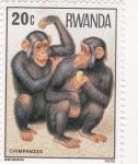 Sellos de Africa - Rwanda -  chimpances