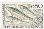 Stamps Republic of the Congo -  pez- Elagatis Bipinnulatus
