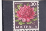 Sellos de Oceania - Australia -  Flores- waratah