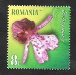 Stamps Europe - Romania -  Flor orquídea purpúrea