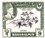 Sellos de Asia - Pakistán -  Algodón-BAHAWALPUR
