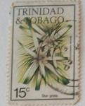 Sellos de America - Trinidad y Tobago -  Star Grass