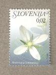Sellos de Europa - Eslovenia -  Flora eslovena