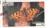 Sellos del Mundo : Asia : Nagaland : Mariposa