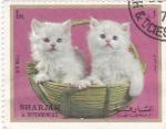 Sellos de Asia - Emiratos Árabes Unidos -  gatitos
