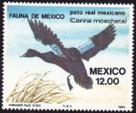 Sellos del Mundo : America : México : Pato Real Mexicano