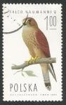 Sellos de Europa - Polonia -  Lesser Kestrel (Falco naumanni), Female