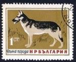 Sellos del Mundo : Europa : Bulgaria : German Shepherd (Canis lupus familiaris) (1964)