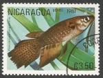 Sellos del Mundo : America : Nicaragua : Pterolebias longipinnis (1981)