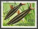 Sellos de America - Nicaragua -  Striped Anostomus (Anostomus anostomus) (1981)