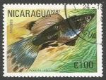 Sellos del Mundo : America : Nicaragua : Guppy (Poecilia reticulata) (1981)