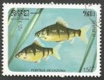 Sellos del Mundo : Asia : Camboya : Five-banded Barb (Barbus pentazona) (1985)