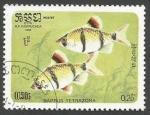 Sellos del Mundo : Asia : Camboya : Tiger Barb (Barbus tetrazona) (1985)