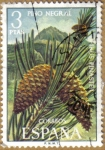Stamps Europe - Spain -  PINO NEGRAL - Flora Hispanica