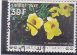 Stamps : Africa : Comoros :  flores- ALLAMANDA