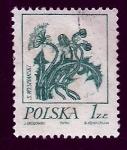 Sellos de Europa - Polonia -  Flor