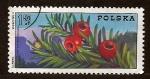 Stamps Poland -  Frutos