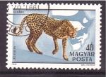 Sellos de Europa - Hungría -  Felinos africanos