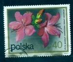 Sellos del Mundo : Europa : Polonia : Rosas japonesas