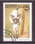 Stamps Bulgaria -  serie- gatos