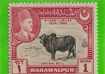 Stamps Asia - Pakistan -  agricultura y ganaderia