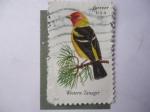 Stamps United States -  Western Tanager. (Piranga ludoviciana)