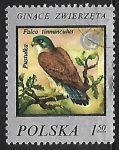 Stamps Poland -  Falcon tinnunculus
