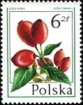 Sellos de Europa - Polonia -  Frutos Silvestres