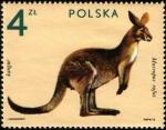 de Europa - Polonia -  Animales de Zológico