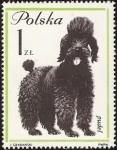 Sellos de Europa - Polonia -  French Poodle