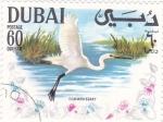 Sellos de Asia - Emiratos Árabes Unidos -  AVE- COMMON EGRET