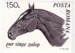Stamps Romania -  CABALLO- PURA SANGRE GALOP