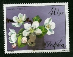 Stamps Poland -  Gruza Pirus
