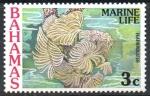 Stamps : America : Bahamas :  PLUMERO