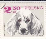 Stamps : Europe : Poland :  PERRO- SETER