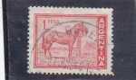 Sellos de America - Argentina -  CABALLO CRIOLLO
