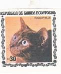 Sellos de Africa - Guinea Ecuatorial -  GATO- RUSSIAN BLUE
