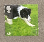 Sellos de Europa - Reino Unido -  Razas Perros