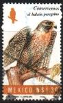 Stamps Mexico -  CONSERVEMOS  EL  HALCÓN  PEREGRINO