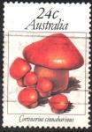 Stamps : Oceania : Australia :  CORTINARIUS  CINNABARINUS