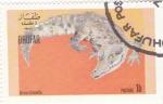 Stamps : Asia : Oman :  COCODRILO AFRICANO