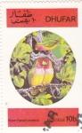 Sellos de Asia - Omán -  AVES- AGAPORNIS